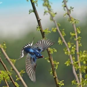 真夏の探鳥地(都内及び近郊)