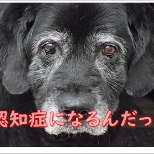犬も認知症にかかるんですよ!!