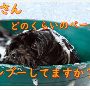 老犬はどのくらいのペースでトリミングすれば良いのかな?