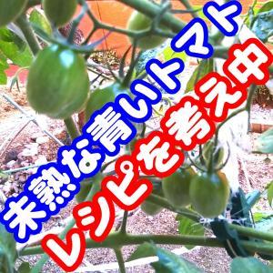 未熟な青いトマトのレシピ