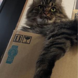 今日は箱に合わせます。