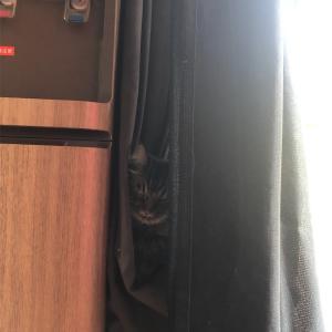 猫の目はごまかせない