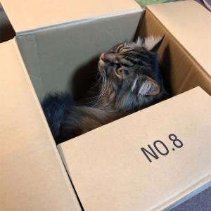 今度の箱は小さ過ぎる