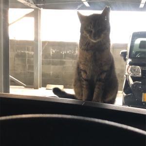 そ、、、その耳は!?