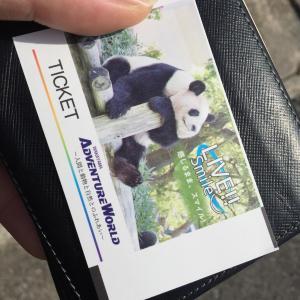 今日はパンダ発見の日