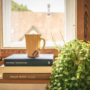 インドアグリーンがおすすめな5つの理由。観葉植物を飾っておしゃれな部屋にしよう。