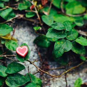 【植物女子になりたい】観葉植物に苦手意識を持つ私のゴムの木の育て方まとめ!