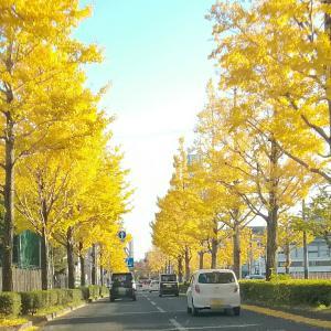 *街路樹の黄色と公園の赤色*