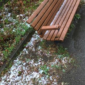 季節外れの雪に驚く桜