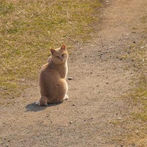 2月22日。今日は猫の日だそうです。