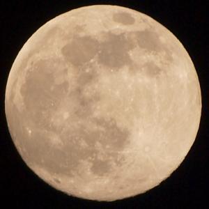 9月21日。今日は月見酒の日だそうです。