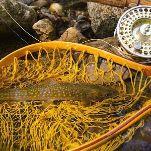 岩魚が釣れたので河原で塩焼きしてソロキャンプ