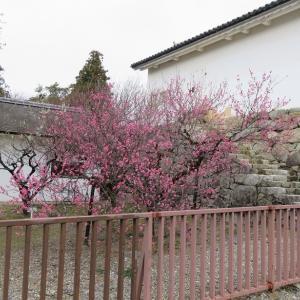 近畿から東海の旅 彦根城と玄宮園を散策