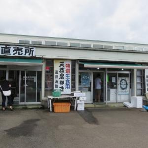 秋田~山形車中泊-5 岩牡蠣食べて酒田へ