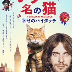 映画「ボブという名の猫 幸せのハイタッチ」実話だからこその感動がある!あらすじ・感想