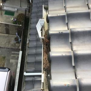 屋根の樋掃除