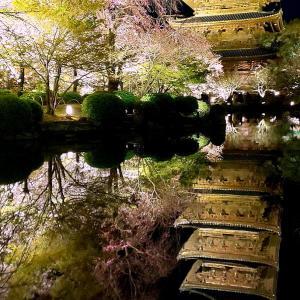 桜満開の京都・・・