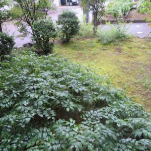 秋雨の時期になりました