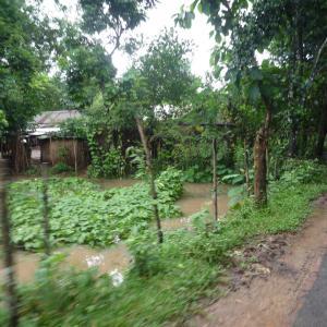 排水機能がないために水が溜まってしまったお庭【バングラデシュ】