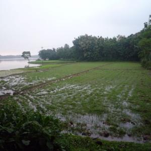 川の国と呼ばれるバングラデシュ②【バングラデシュ】