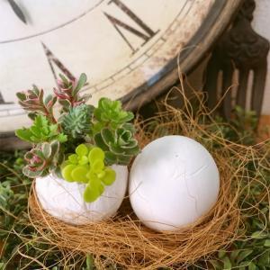 石膏の卵型プランターで多肉植え