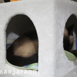 新しい猫タワーのウロに関する考察と八雲氏。