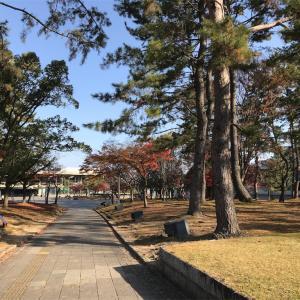 鹿も出迎えてくれた奈良勉強会、〆は日本酒だー!、、後日追記あり
