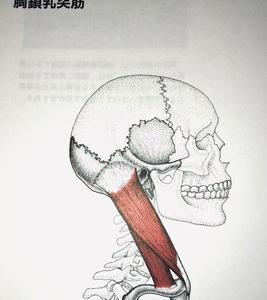 肩凝り、偏頭痛