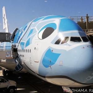ANA A380 フライングホヌ搭乗記(後編) ~エコノミー