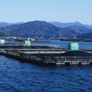福伸電機(福崎町)がIT技術活用の給餌機を発売!儲かる養殖漁業への取り組みとは?