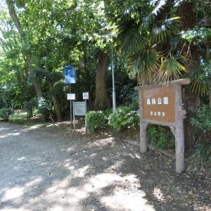 現地特写!習志野市森林公園の花菖蒲