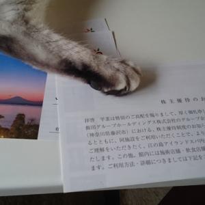 飯田グループホールディングス、ヤマダ電機、オーハシテクニカより、3月権利の優待券が届きました☺️