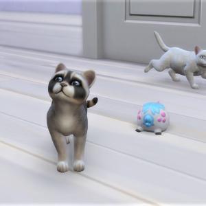8.子猫の譲渡会で新しい家族に大はしゃぎする@Cats & Dogs