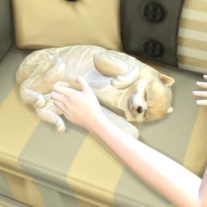 14.犬と猫を新しく迎えてウシマル家の可愛い指数を上げていく@Cats & Dogs