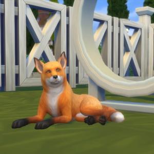 15.ベルが妊娠したかもしれない騒動@Cats & Dogs