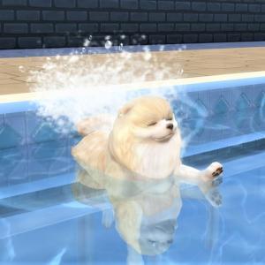 26.犬かきの可愛さは衝撃波を出しているとおもう@Cats & Dogs
