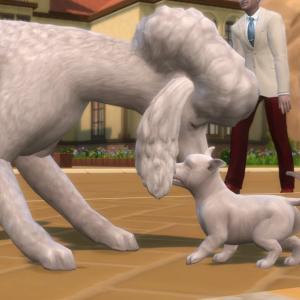 28.シーザーがパパになりました@Cats & Dogs