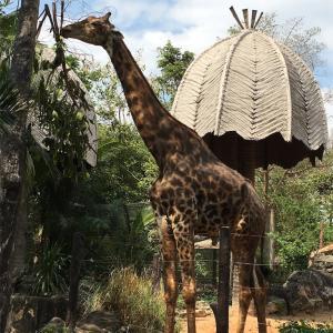ドウシット動物園🐨🐼🦁
