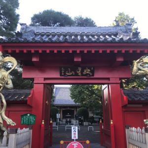 調布市の大雲山金龍禅寺。かわいいリスたち(#^^#)