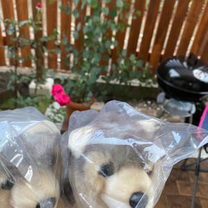 【追記】三峯神社オオカミのぬいぐるみプレゼント。