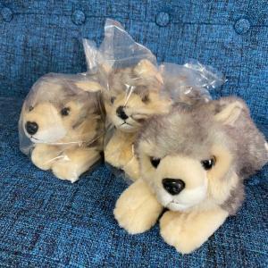 三峯神社のオオカミぬいぐるみ数限定販売します。