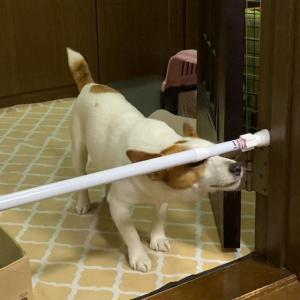 「1本の突っ張り棒」実証実験② 果たして「魔法の棒」になり得るでしょうか!