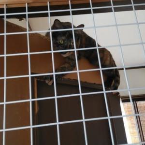 うちの猫部屋の扉