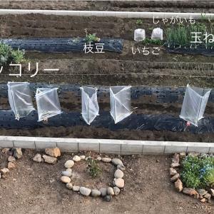 【畑で家庭菜園1年目】畝を作った