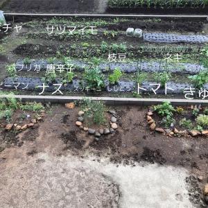 ジャガイモ、玉ねぎ収穫【畑で家庭菜園1年目】