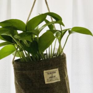 【購入品】ダイソーの300円観葉植物でポトスを買ってみた。吊り下げ鉢と合わせたとっても可愛くなった♪