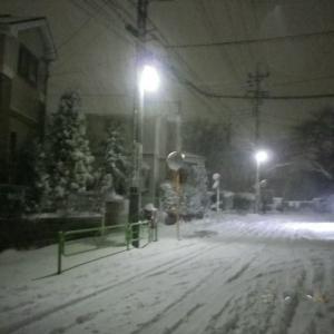 夕べからの雨が雪に変わり・・・・・
