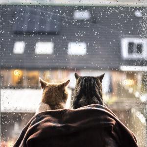 雨 だよなあ・・・・・・・