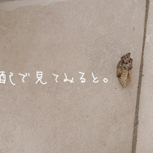 九州の雨。