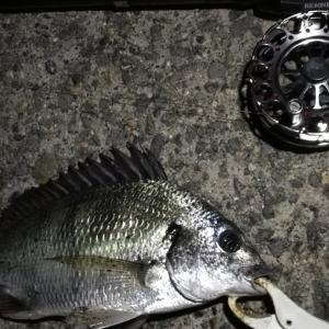 【釣り】南港へち釣行 (2020/08/28 南港ヘチ釣り 真チヌ 48㎝、キビレチヌ 40cm~ 釣果有り)